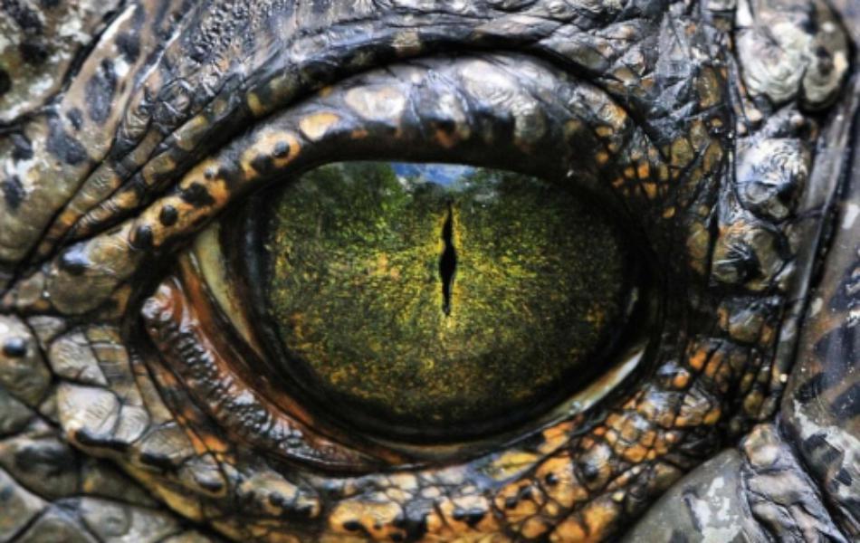 Картинки по запросу рептилоид